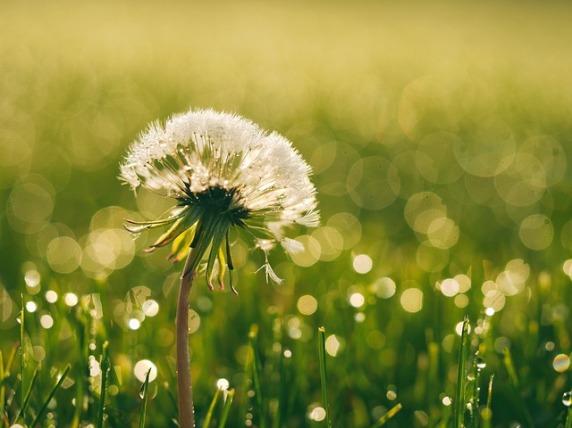 bloom-1840005_640
