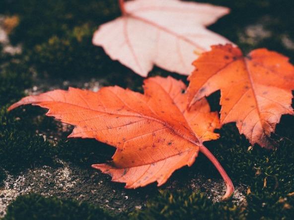 leaves-1030816_640