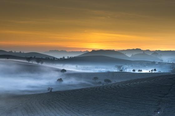 tea-plantation-3358870_640