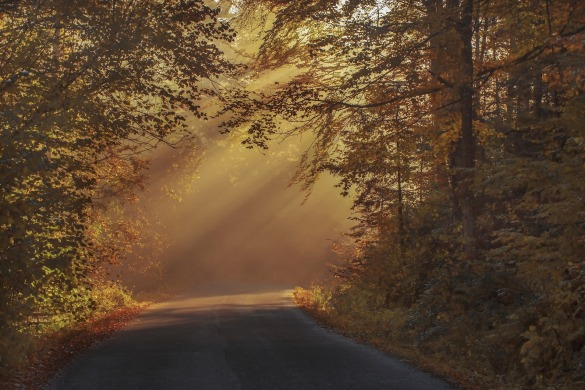 autumnal-1868944_1920