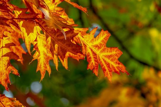 fall-foliage-3736055_1920