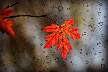 leaf-3865014_1920 (1)